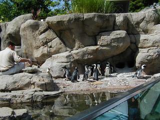 penguinfeeding3.JPG