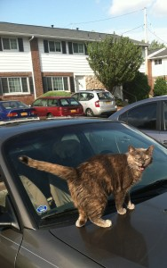 Precious standing on my car.